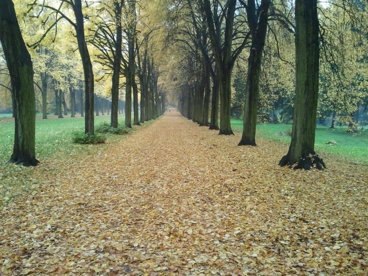 Autumn at Sansoucci