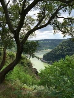 Rhine View and Lorelei Rock