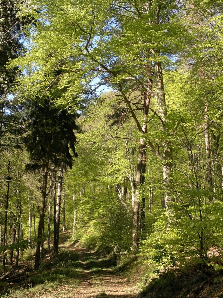 heidelberg forest